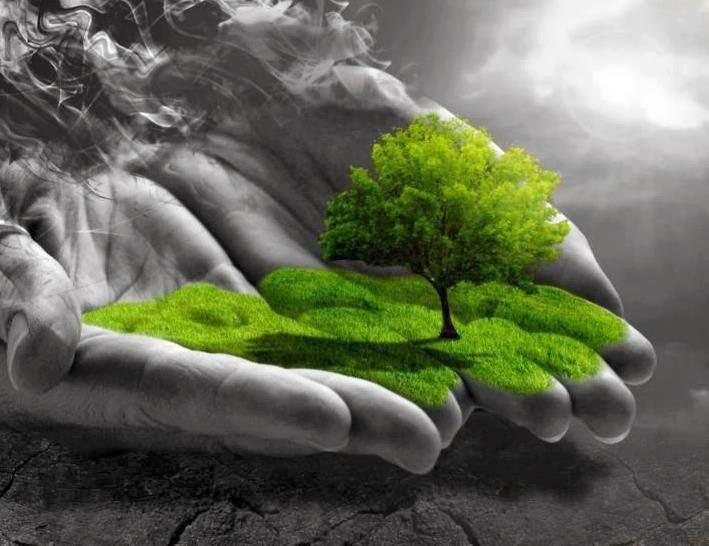 Rolul pădurilor