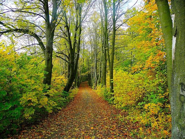 ce importanta are pădurea pentru om)